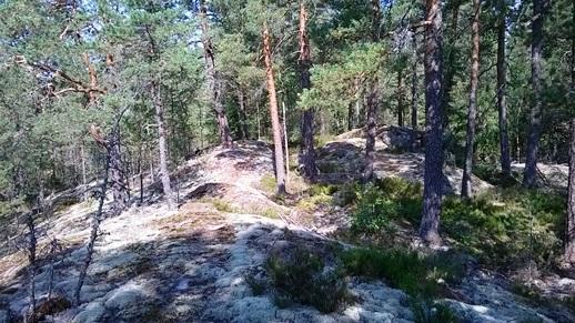 HuLi Finaali ja eGames 2014. Pienipiirteiset metsän peittämät kalliomäet tuovat suunnistuksellista haastetta. Näkyykö ratamestarin prikka?