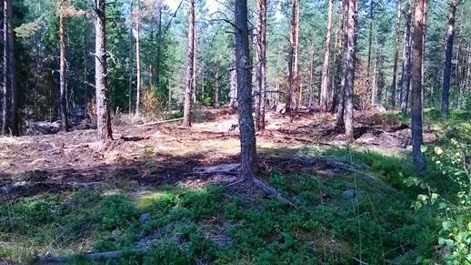 HuLi Finaali ja eGames 2014. Salama sytytti pienen maastopalon kilpailumaastoon. Palolla ei vaikutusta HuLin taikka eGamesin ratoihin.